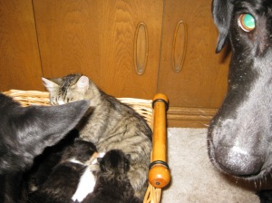 kittens 010